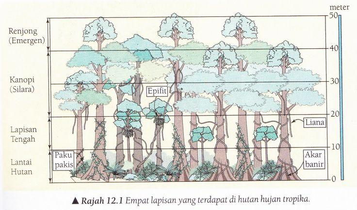 Image result for geografi tingkatan 1 tentang hutan hujan tropika