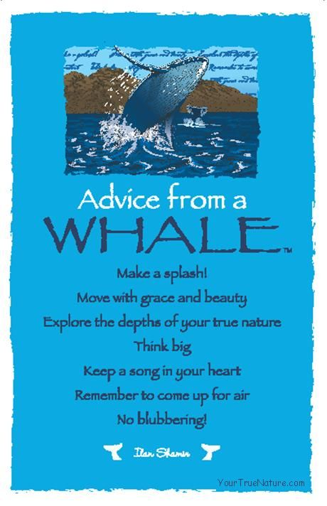 Spirit Totem Animals:  #Advice from a #Whale.