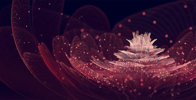 Flores fractais de Silvia Cordedda