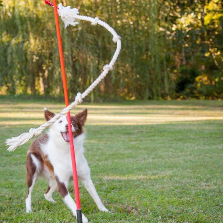 Doggy tether ball w/ free pee stick. http://hahastuffyoucanbuy.com/tether-dog