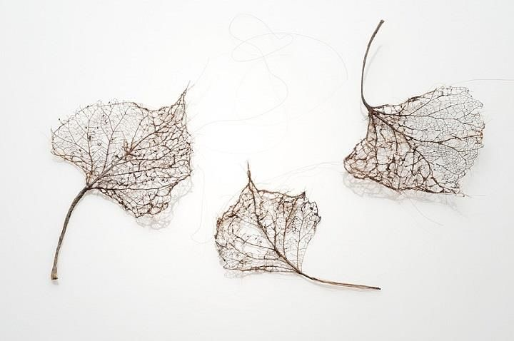 Human Hair Leaves! - the intricacies of a leaf's veining are recreated by wrapping, stitching, and knotting together strands of human hair by Jenine Shereos