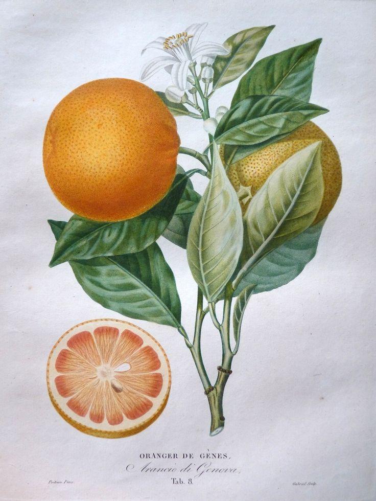 920 best Botanical Art & Illustrations & Prints images on ...