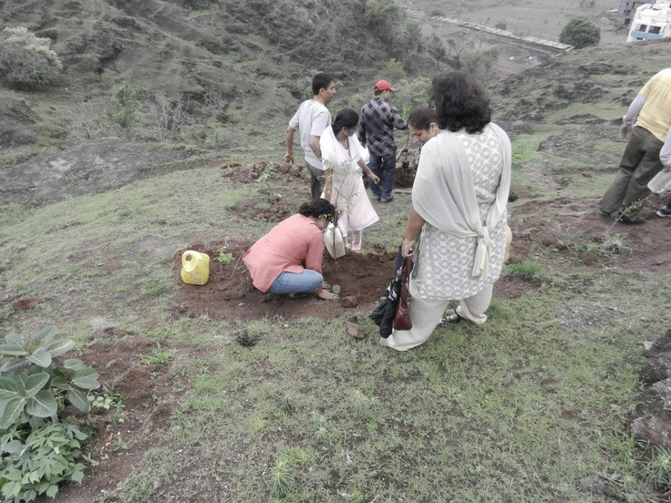 Plantation of native trees on hill by Rotary club