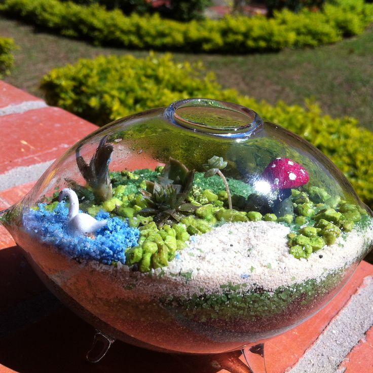 Terrario en cristal con suculentas