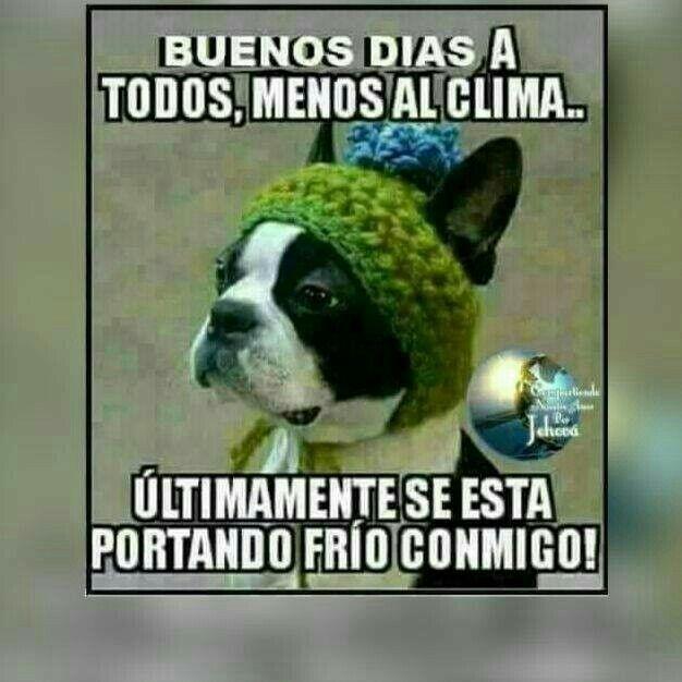 Y Yo Voy A Rematar Mi Catarro Para Peor Saludos De Buenos Dias Chistes De Buenos Dias Memes De Frio