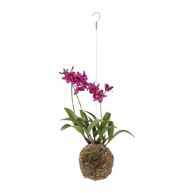 Orchid Kokedama- when the 'daddy person' died, you missed his sharing his orchids with you. (no disrespect here). So...