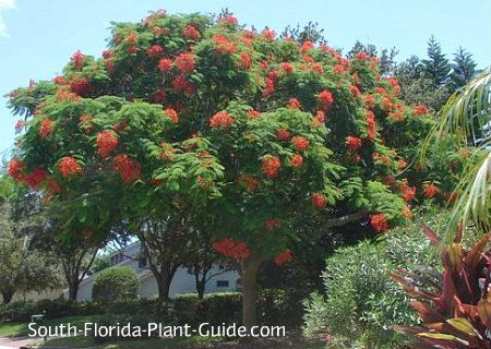 Flowers North Miami Beach Florida
