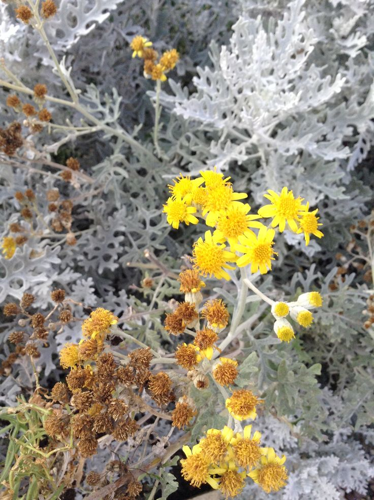 Silver and yellow outbursts...