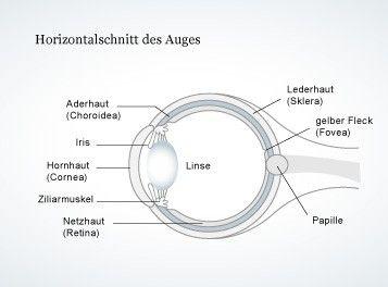 Der Aufbau des Auges ist komplex. Erst das Zusammenspiel von Hornhaut, Linse, Netzhaut und der anderen Elemente ermöglicht gute Sicht.