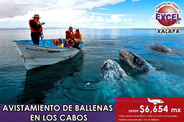 Ya comienza la temporada de avistamiento de Ballenas en Los Cabos, Baja California Sur. Reserva hoy mismo!