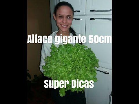 Super Dicas para Plantar Alface. venha aprender... - YouTube