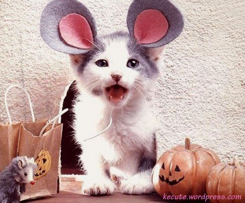 kitten dressed as mouse!Halloween Parties, Kitty Cat, Funny Halloween, Animal Costumes, Halloween Costumes, Pets, Cute Cat, Cat Costumes, Calico Cat