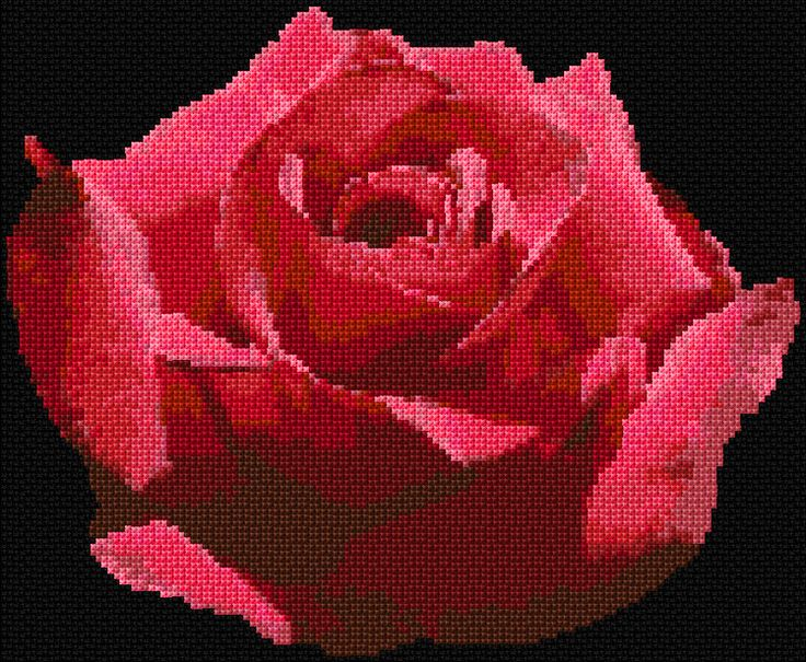 Rose 3 Free Cross Stitch Pattern