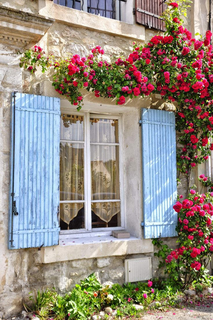 Red Roses in Velleron, Provence...: