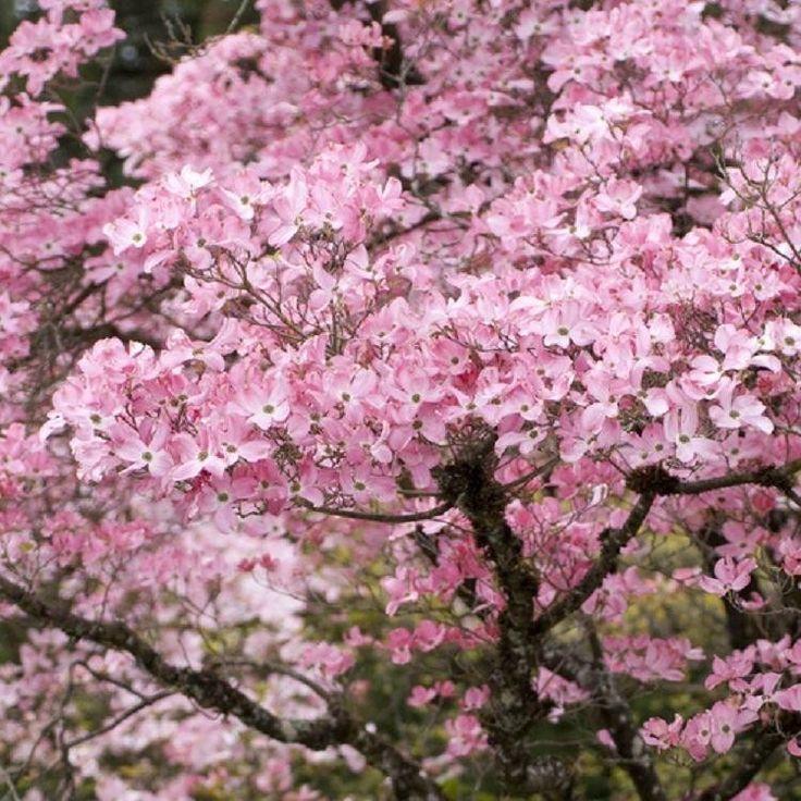 18 besten Garden Bilder auf Pinterest | Blume, Der baum und ...
