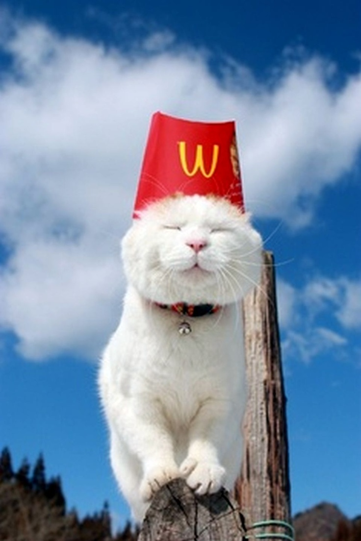 Dreaming Of McDonalds French Fries ♥• Pets Palace