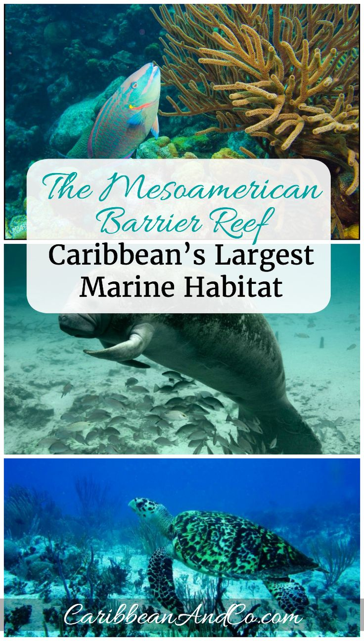 The Mesoamerican Barrier Reef, the second largest in the world is a part of the Caribbean Sea and stretches 600 miles south-east alongside the coasts of Mexico, Belize, Guatemala and Honduras.   It's a great place to go snorkeling or scuba diving.