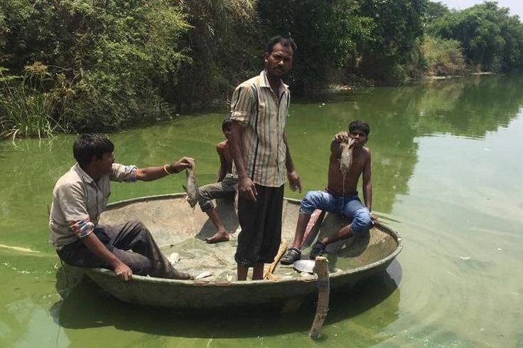 Lake of dead fish in Bengaluru: After a stinky, sleepless night for residents, cleanup begins #sewage #cleanup http://fiji.remmont.com/lake-of-dead-fish-in-bengaluru-after-a-stinky-sleepless-night-for-residents-cleanup-begins-sewage-cleanup/  # Lake of dead fish in Bengaluru: After a stinky, sleepless night for residents, cleanup begins The gruesome sight and stench of hundreds of dead fish floating on Doddakallasandra lake on Monday morning shocked residents of a Bengaluru locality — an…