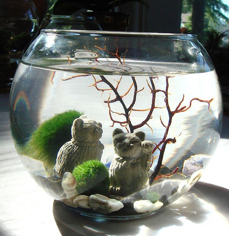 Lucky cat marimo moss balls maneki neko nano aquarium for Moss balls for fish tanks