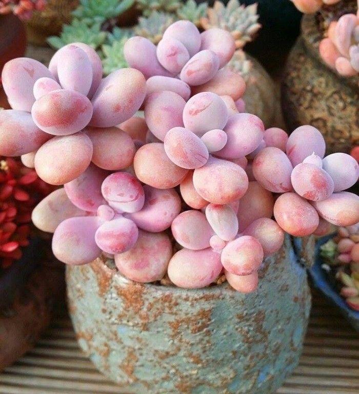 美腻的多肉植物-韩系好可爱啊啊啊啊
