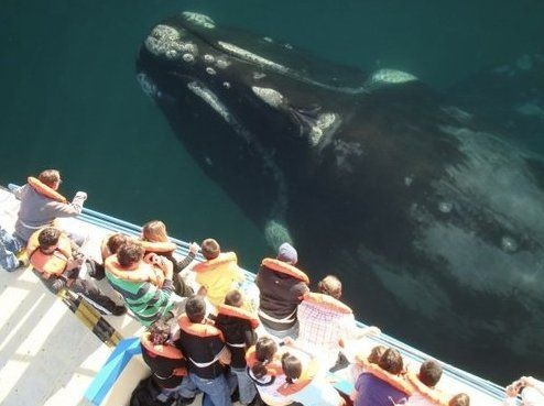 Sur Argentino: Amazing, San Diego, Bucket List, Animals, Whale Watching, Sea, Places, Whales