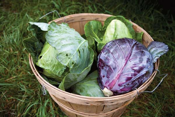 Best Staple Crops for Building Food Self-Sufficiency - Organic Gardening - MOTHER EARTH NEWS