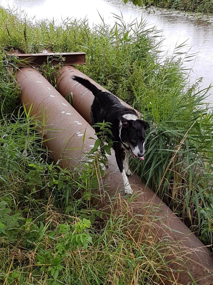 Hunde Foto: Jutta und Simba - Simba liebt die Natur! Hier Dein Bild hochladen: http://ichliebehunde.com/hund-des-tages  #hund #hunde #hundebild #hundebilder #dog #dogs #dogfun  #dogpic #dogpictures