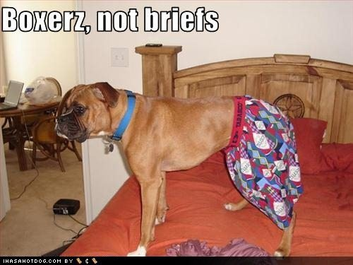 Image result for boxer wearing boxers