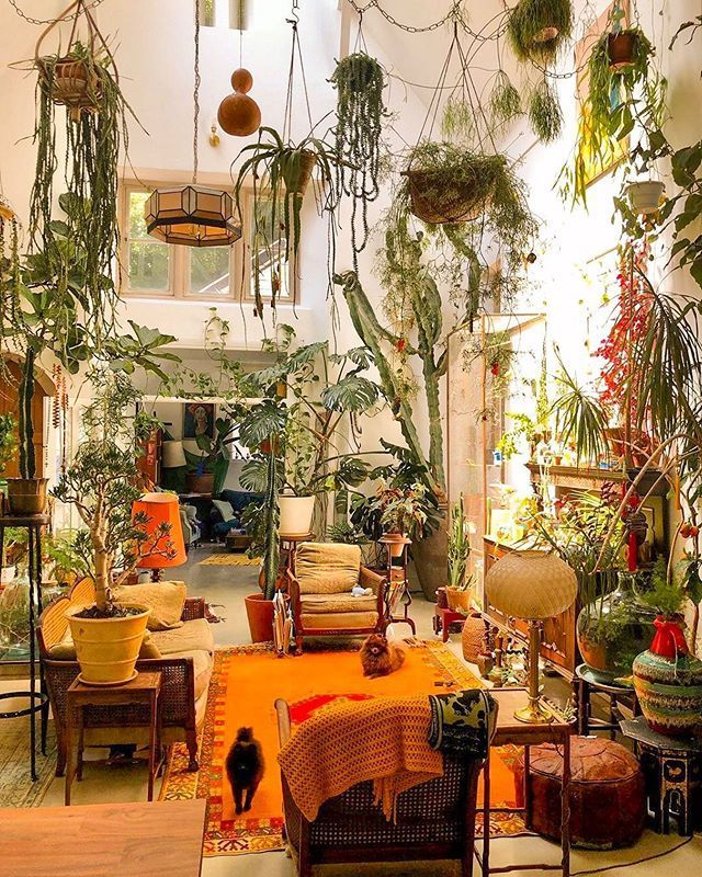 6 Indoor Garden Model Ideas For Tiny Minimalist Homes In 2020 With Images Room With Plants In 2020 Room With Plants Stylish Home Decor Home
