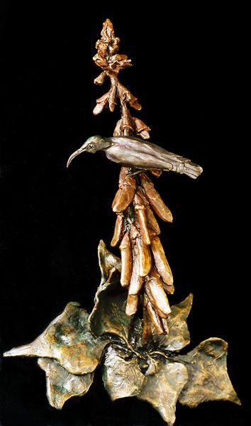 Amethyst sunbird on Erythrina humeana flower - Sarah Richards - Sarah Richards