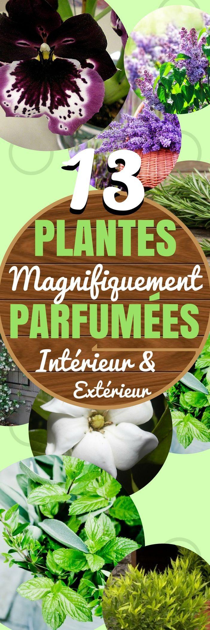 Les plantes apportent de la vie à votre intérieur et extérieur pour de nombreuses raisons, et un grand avantage pour certaines plantes est leur parfum merveilleux. Jetez les bouteilles de désodorisant et apporter une bonne odeur naturelle avec ces beautés ! 1. Les géraniums parfumés ont une multitude de parfums et peuvent être cultivés dans de petites jardinières sur le rebord de votre fenêtre. 2. Le jasmin s'épanouit dans les endroits .. #plantes #fleurs #maison #interieur #décoration #déco