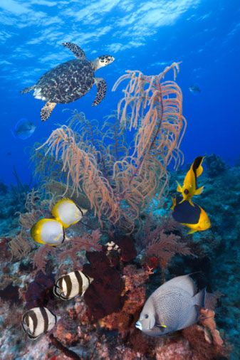 Galapagos Island underwater wildlife