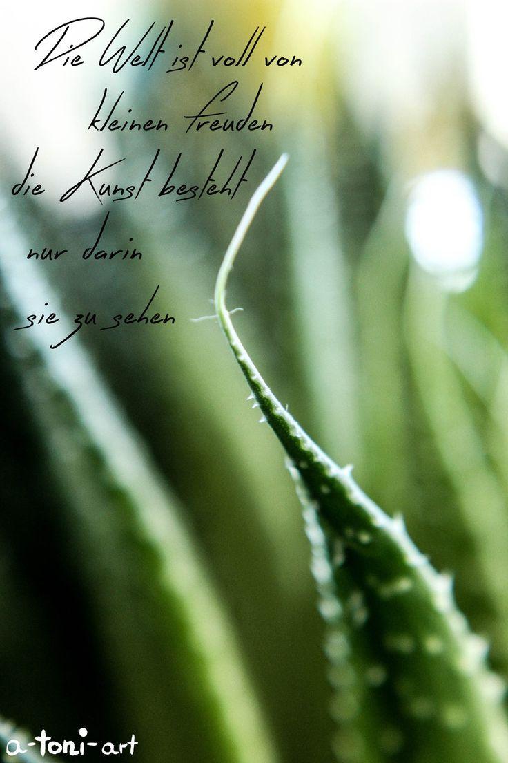 Sprüche Zitate Wörter Words Claims Quotes Caligraphy Macro Makro Fotografie Photografie Plants Plant Pflanze Pfanzen Grün Green Flora Garten Garden Nature Natur Detail Details Kleine Freunden Little Happy Welt Earth