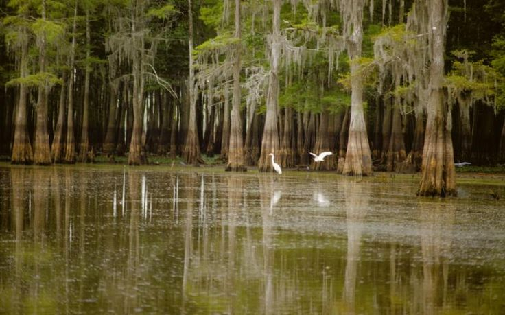 Standing Rock has energized opponents of the Bayou Bridge Pipeline