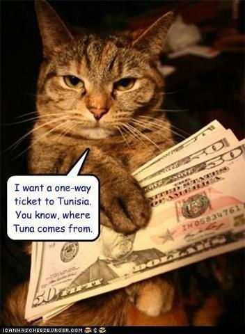 108 best images about cats love tuna on pinterest cat for Is tuna fish good for cats