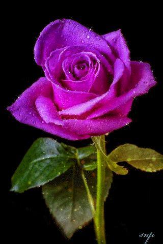 gif de flores hermosas - Buscar con Google