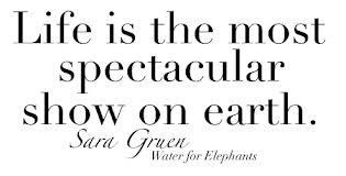water for elephants, quotes - Google-Suche