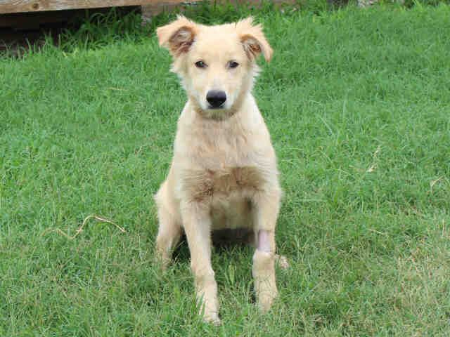#OKLAHOMA ~ My name is TANGO. I am a female Golden Retriever mix. I am around 7 months old and have been living at the shelter since July 24th, 2014. I am a sweet lady looking for the perfect family. Once you look into my big brown eyes, you will be sure to fall in love. Come by the shelter to meet me today!