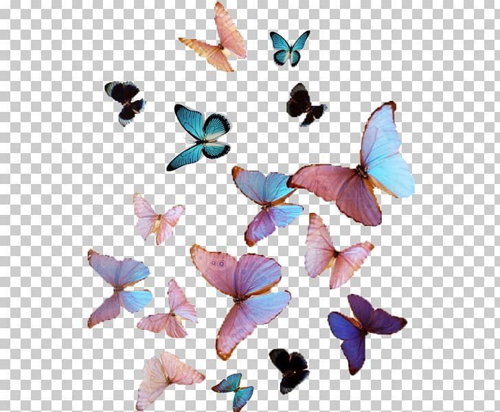 Butterfly Aesthetic Png Butterfly Illustration Butterfly Art Overlays Transparent Background