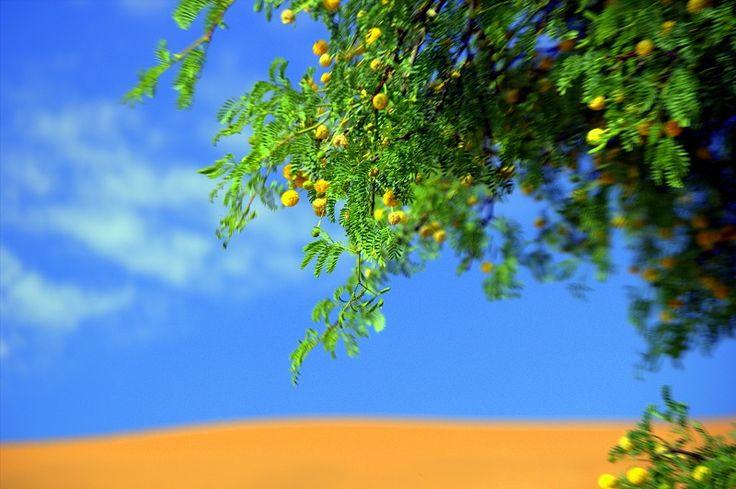 Surprisingly lush random vegetation in the Namib-Naukluft National Park of #Namibia #Africa