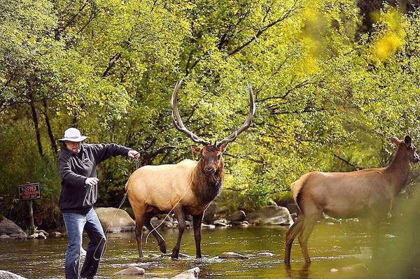 112 Best Fly Fishing Images On Pinterest