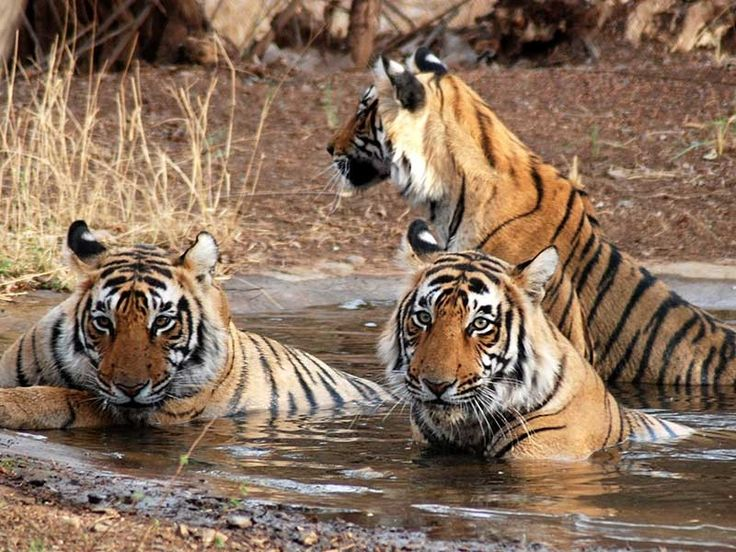 Ranthambore National Park in Rajasthan, India