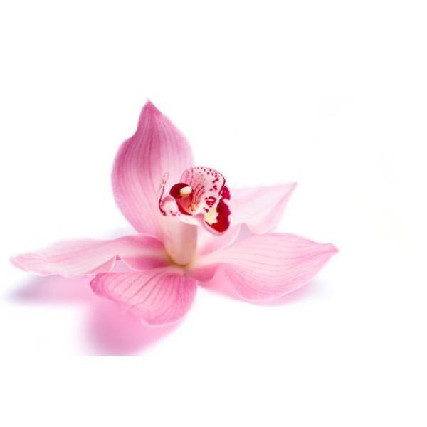 Rizactive Orchid, 10 мл - экстракт орхидеи в молочке  Экстракт орхидеи позаботиться о красоте вашего личика. Он укрепляет и обогащает минералами и витаминам. Укрепляет иммунитет кожи, убирает мелкие мимические морщинки, восстанавливает водный баланс. #натуральный_уход #косметика_без_пав #косметология  #органик #гидролат #душистая_вода  #органическая_косметика #косметика_ручной_работы  #рецепты_красоты #секреты_красоты #советы_красоты #все_о_красоте #здоровый_образ_жизни