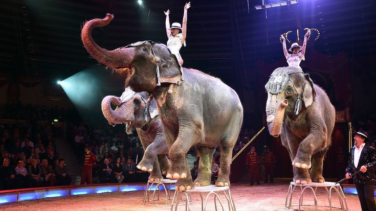 Denmark is buying four circus elephants with the intent of retiring them. | Animals that I love | Exotic pets, U.s. states, Animals
