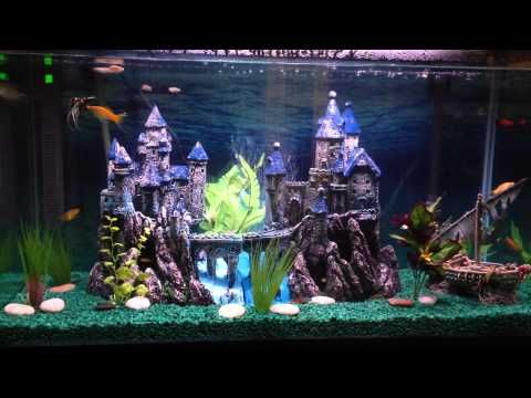 Best 25 fish tank themes ideas on pinterest aquarium for Fish tank game