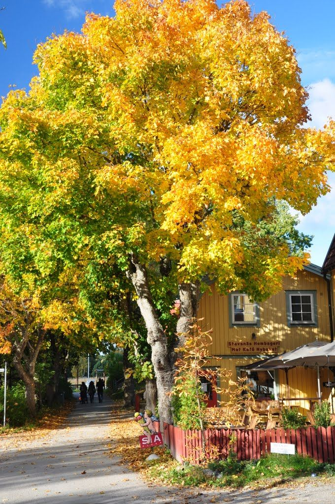 Autumn  natural swedish colors