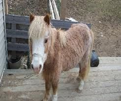 Worming Your Mini Horse