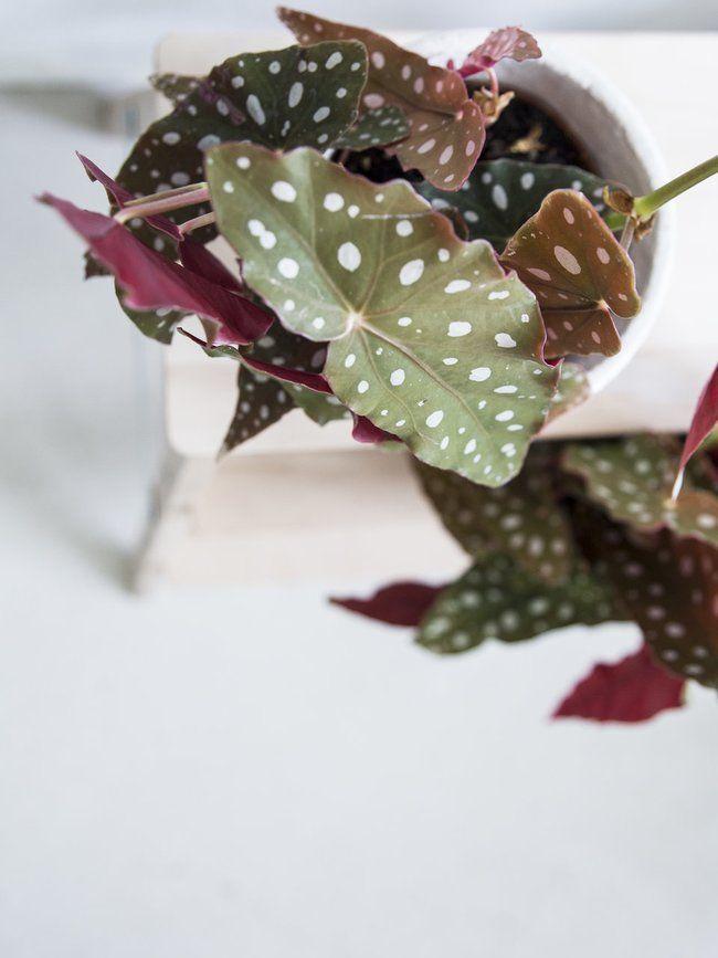 83 best \LUFTREINIGENDE PFLANZEN images on Pinterest Air filter - grose wohnzimmer pflanzen