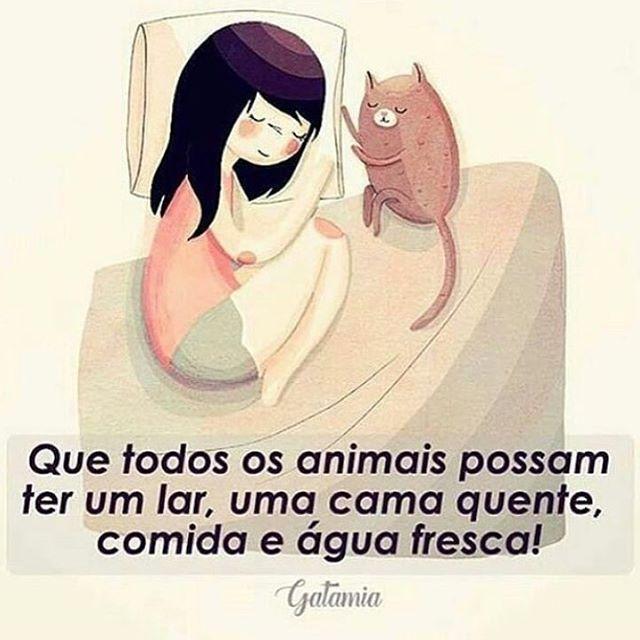 AMÉM! ❤️ #petmeupet #boanoite #cachorro #gato #amoanimais