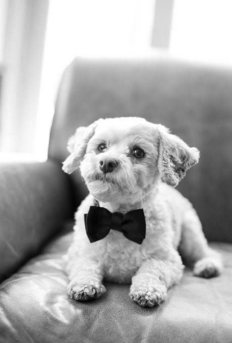 Ways to Include Pets in Your Wedding : Brides.com